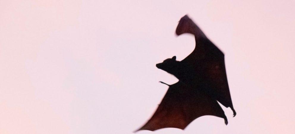 Emotionale Vampire aus dem eigenen Leben entlassen
